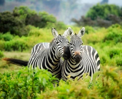 Sconti per safari di gruppo