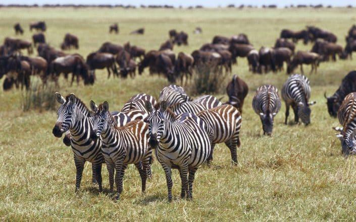 safari tsavo ovest