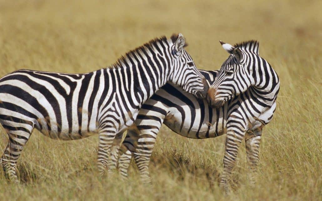 Safari 3 giorni: Tsavo Est e Amboseli