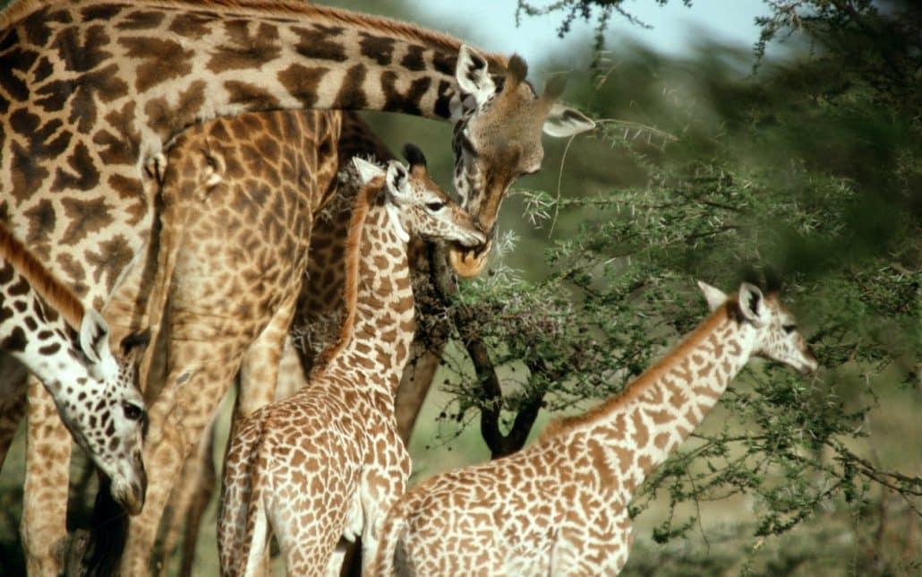 3 Giorni 2 Notti (Tsavo Est, Amboseli) da Watamu Malindi