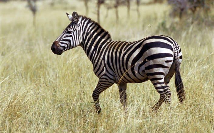 safari tsavo kenya