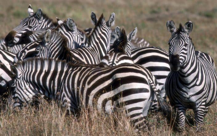 safari kenya da malindi
