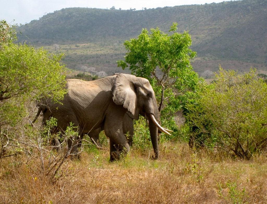Santuario degli elefanti di Mwaluganje